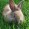 Petits lapins ,tout plein,tout plein ...
