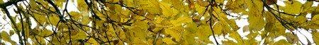 feuillages_jaunes