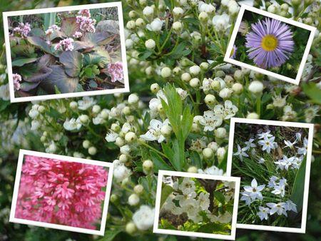 Autres fleurs (6)