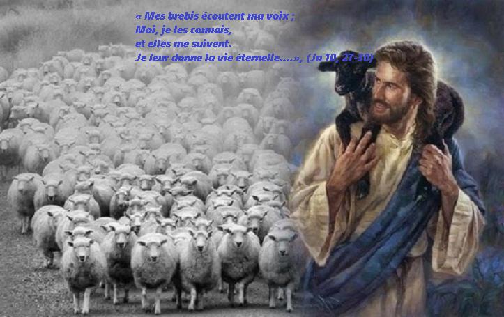 Évangile et Homélie du Dim 12 MAI 2019. Mes brebis écoutent ma voix, elles me suivent, Je leur donne la vie éternelle