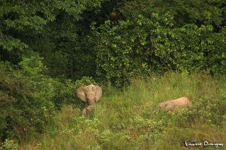 Elephant_groupe_1_2