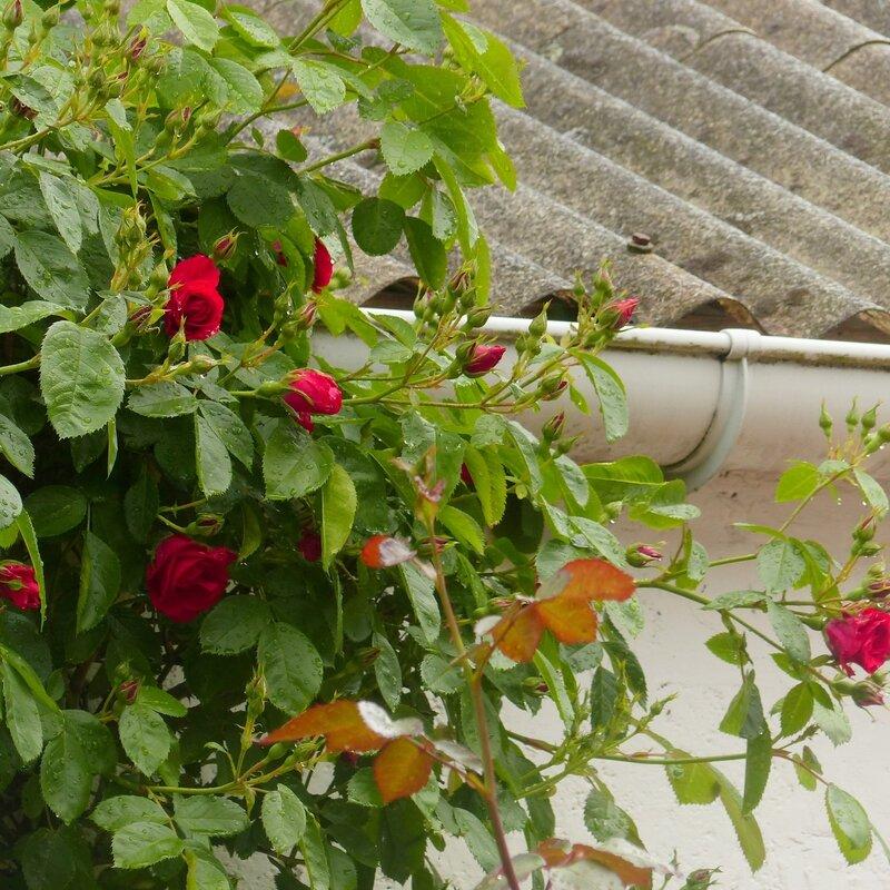 a les fleurs roses1