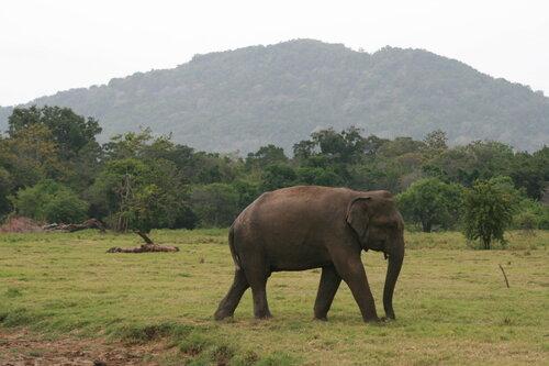 Sri_Lanka_237