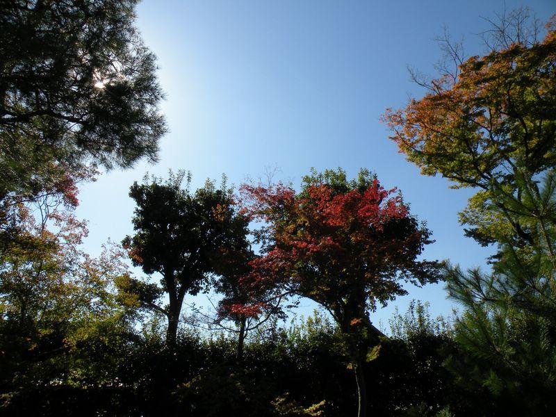 Japon_Kyoto_2009_036
