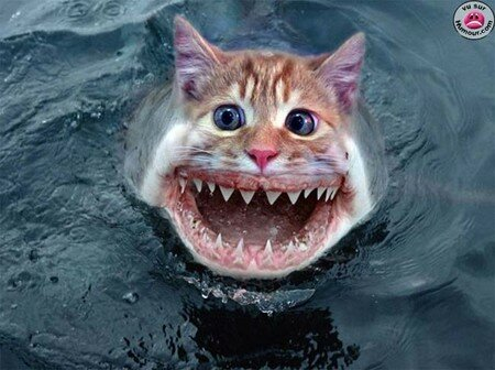 chat_requin_1_