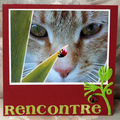 appel de carte sur le theme des chats
