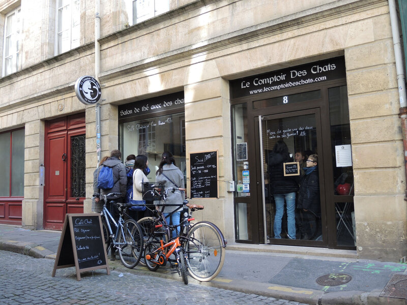 Bordeaux, quartier de la Grosse Cloche, bar à chats (33)