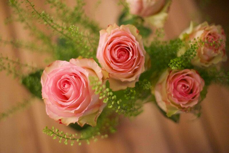 rose rose - 1