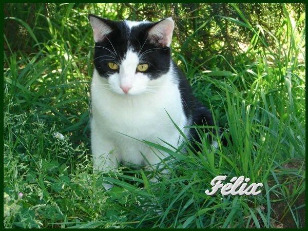 Notre 1er chat, Félix...je l'ai récupéré alors qu'il était sur le point d'être confié à la SPA...son truc à lui, c'est le jardin ! c'est avec lui qu'une histoire avec les chats à commencé.....
