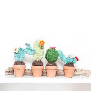 cactus4_small2
