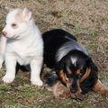 FUNNY femelle née le 19/09/2010