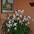 59 Orchidées- cymbidium