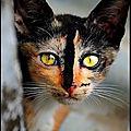 Image du jour - toutes les couleurs sont dans la nature du chat multicolore...