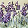 La saison des iris