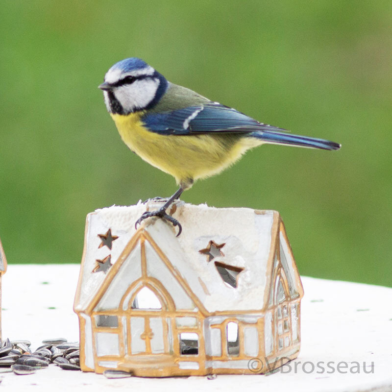 maison-oiseau04