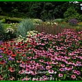 Jardin lilaveronica (67220)thanvillé