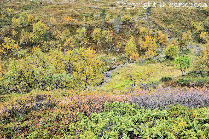 Pallas_Fell_Lapland_ (41)