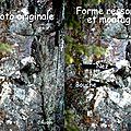 CR-1268 - partie de visage - ressortie