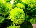3 fleur verte3227219004_a3e54036e1