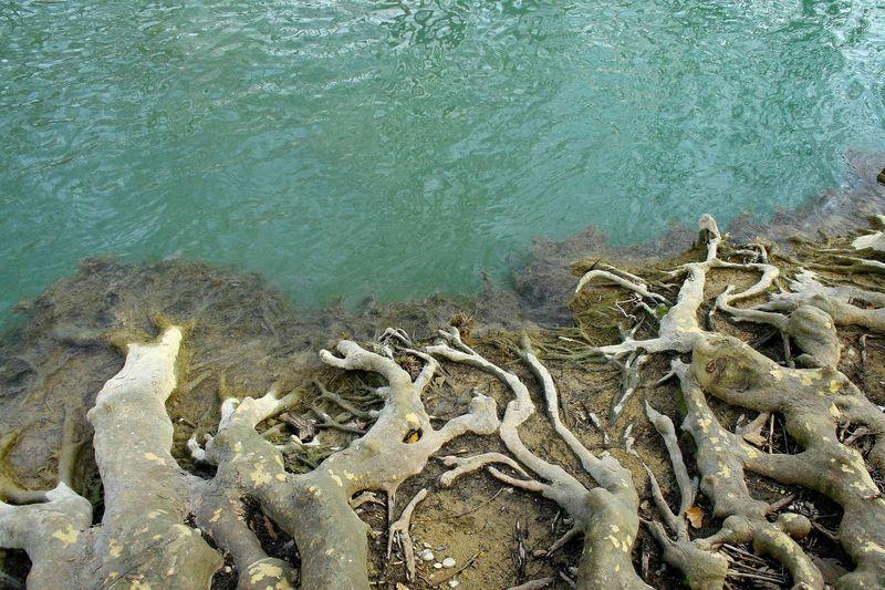 racines_et_eau