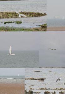 mouette_et_bateau2