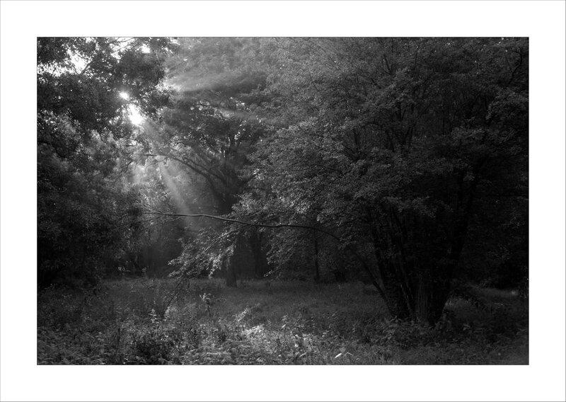 Galuchet paysage rais soleil nb 110817 2