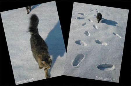 Hiver MontanaPatch Cats