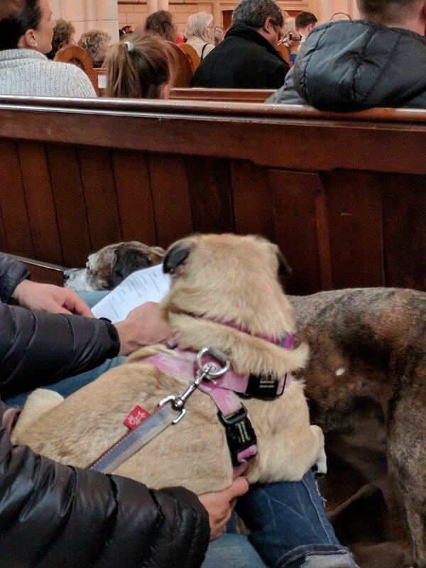 blessing animals 2