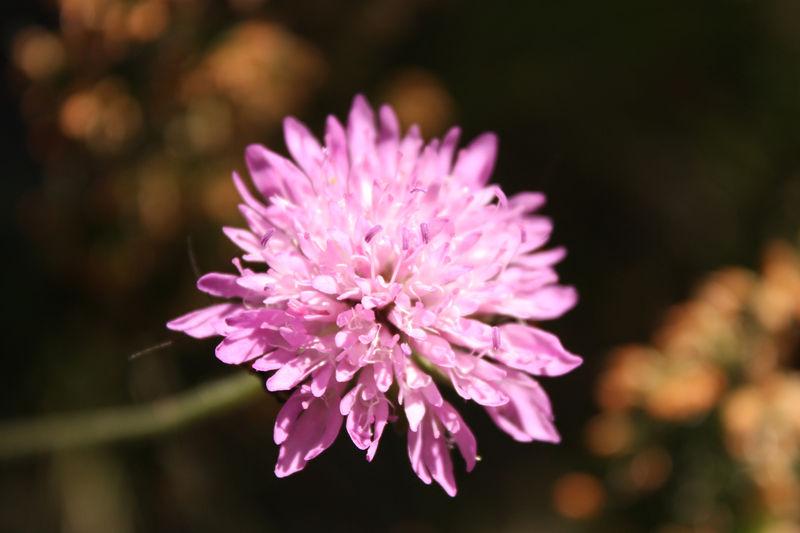 Jolie fleur inconnue