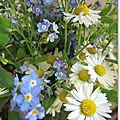 petites fleurs du printemps Marimerveille