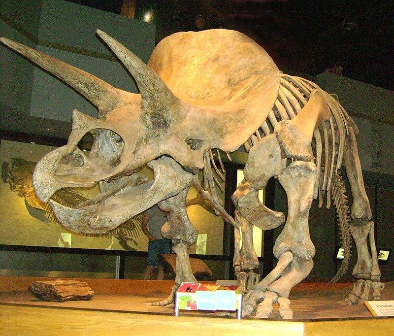 1024px-TriceratopsTyrrellMuseum1