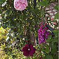 Windows-Live-Writer/jardin_6BD4/DSCF3625_thumb