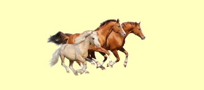 Cheval 1
