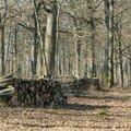 La Forêt d'Orléans - Déboisement
