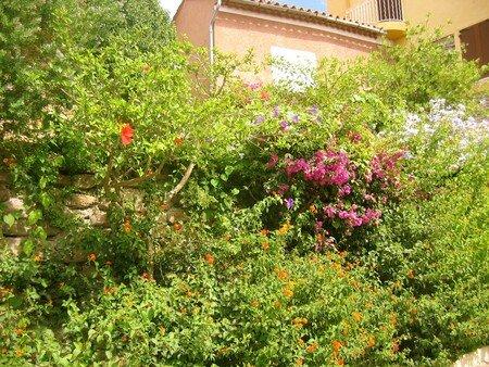 Bormes_fleurs_1