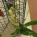Les Orchidées......