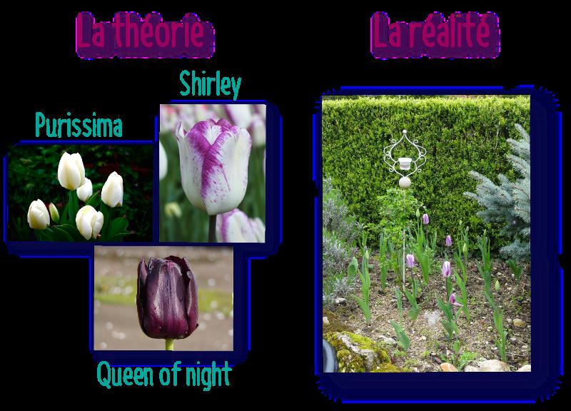 le theorie et la realite des tulipes