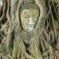 10 Bouddha dans l arbre