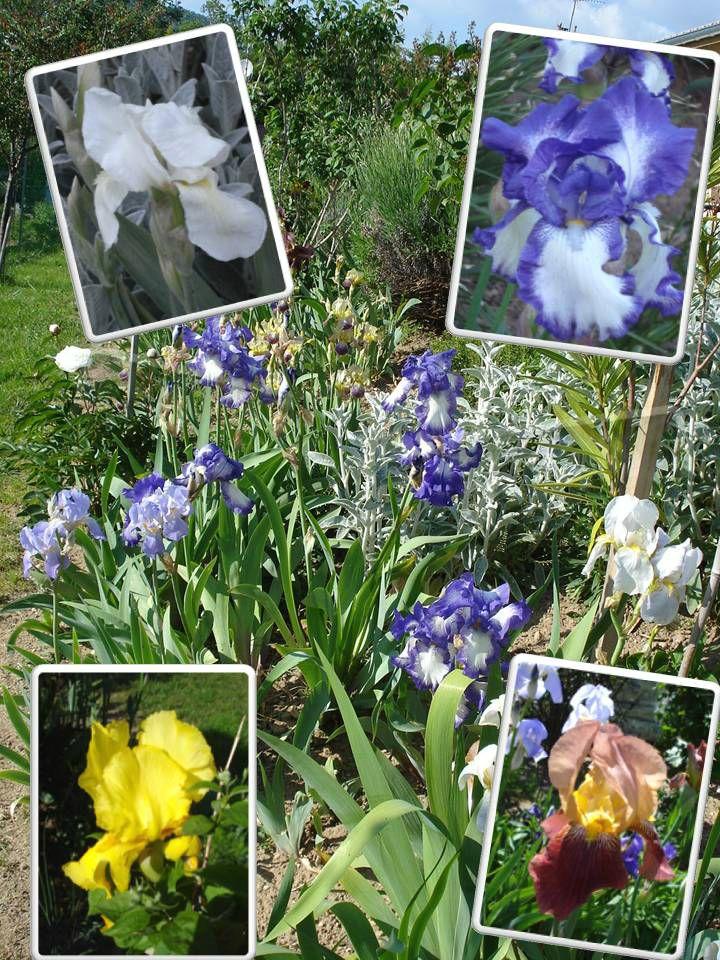 Fleurs 2009-2010 (22)