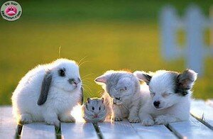 lapin_hamster_chaton_et_chihuahua