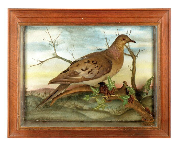 EveryObjectTellsAStory_Passenger_Pigeon_080-700x571