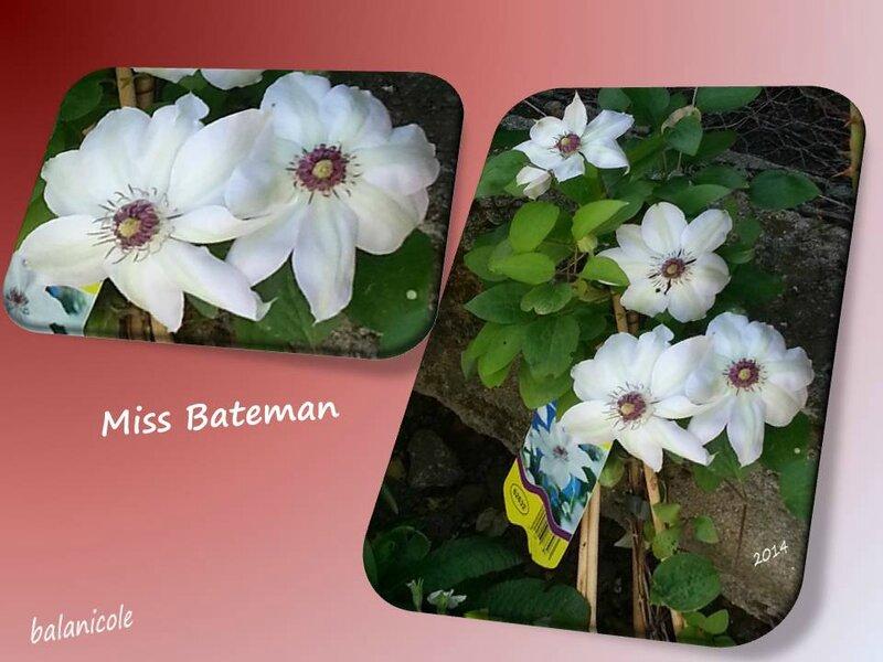 balanicole_2015_33_miss bateman