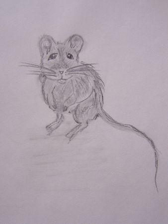 La petite souris (2)
