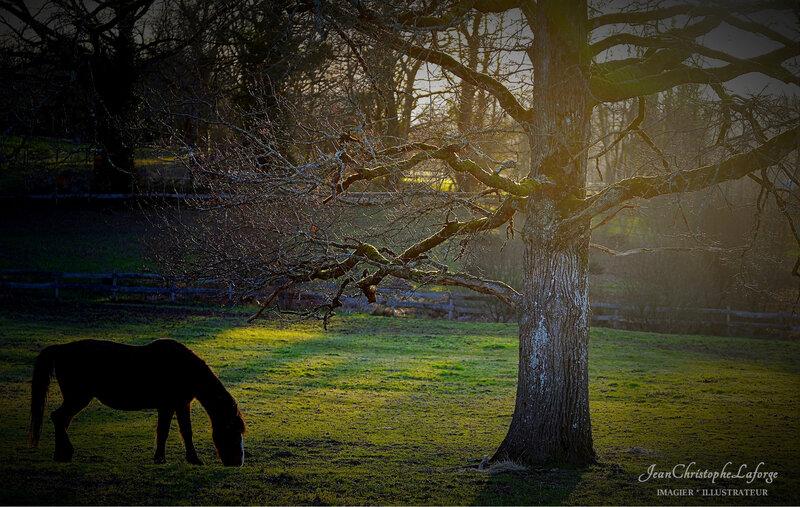 Cheval busserollais Janv 2020 (1)