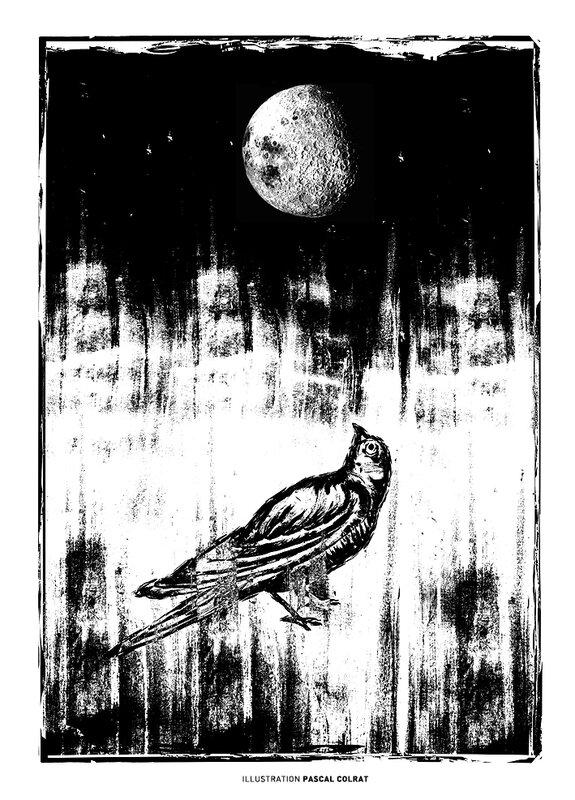 oiseaux lune bd