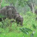 Voyage 2009 Inde du sud
