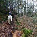 Balade à cheval dans la forêt P1080277