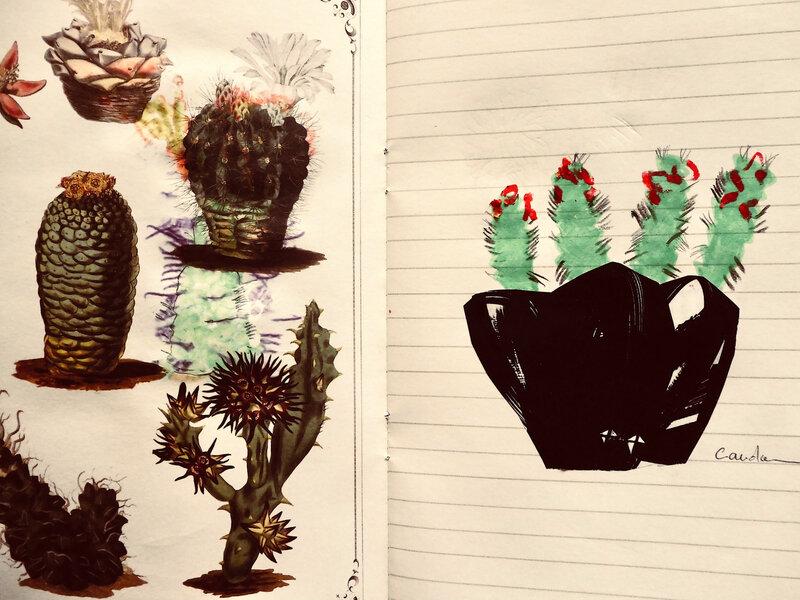 cactus 14
