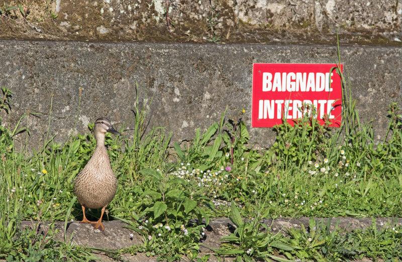oiseau Cane pancarte Baignade Interdite 060520