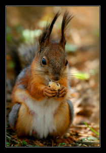 Squirrel__by_Yaninah